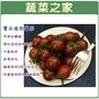 【蔬菜之家】大包裝G51.寶石迷你蕃茄種子80顆(黑櫻桃蕃茄)
