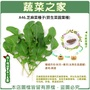 【蔬菜之家】A46.芝麻菜種子(箭生菜圓葉種)(共有2種包裝可選)