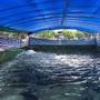 【逍遙閣】养殖帆布水池养虾水产工业化养殖箱PVC防水布刀刮布水池挡风篷布