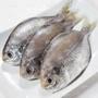 【澎湖肉魚(肉鯽)-約2斤/組】新鮮魚貨乾淨處理產地直送(秤重計價)-2501003