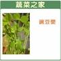 【蔬菜之家】大包裝J05.豌豆嬰1000公克(1公斤)豌豆芽菜種子)