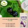 (現貨供應)ViBRRi紐西蘭有機軟乾黑醋栗