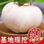 甘肅特產蘭州鮮百合新鮮百合農家自產甜百合食用蘭州百合大個甜糯