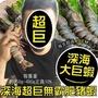 【海肉管家】嚴選深海鮮美肥豬蝦(4支/每支約350~400g±10%)