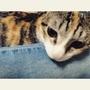 貓侍飼料 黑+白組合價