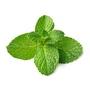 德國百靈油 現貨新包裝China Oel 百靈油100ml+吸入管3支