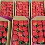 2019草莓季-大湖現採新鮮草莓1台斤禮盒裝!!中部市區5盒免運!!!!歡迎團購 宅配到府!台中市區可約自取