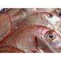 魬鯛(盤仔魚)-花格海味澎湖海鮮