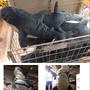 現在✨原單Ikea同款鯊魚抱枕✨鯊魚娃娃 生日禮物 聖誕節禮物 送禮首選