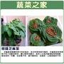 【蔬菜之家】大包裝A77.韓國芝麻葉(韓國烤肉用)3克(約850顆)