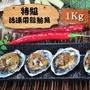 [漁季]特級活凍帶殼鮑魚1包(1000g±10%/18入/包)