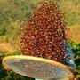 哥倫比亞 聖荷西莊園 橡木桶發酵 水洗