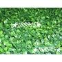 七里香草皮 裝飾草皮 塑膠草皮 假草皮 庭園綠化 園藝草皮