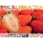 【果之蔬】日本熊本草莓( 300克±10%/盒)