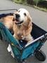 美國進口 露營手推車 寵物推車 折疊式推車 摺疊 拖車 折疊 載貨