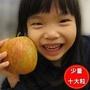 福壽山惠蜜蘋果(10大粒裝)