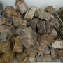 #中部水族器材買賣商#木化石#