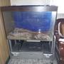 魚缸3呎請自運