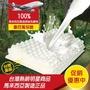 【班尼斯】按摩型天然乳膠枕 壹百萬馬來西亞製正品保證‧附抗布套、手提收納袋(枕頭)