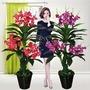 裝飾盆栽 蘭花蝴蝶蘭樹仿真植物落地盆栽大型客廳盆景塑料花裝飾花綠植