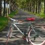 限量海尼根風潮腳踏車(僅限宜蘭礁溪自取)