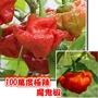 紅色魔鬼椒、毒蠍辣椒種子~100萬度(極辣)