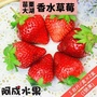 【阿成水果x買一送一】苗栗大湖1號級大草莓(25-30粒/600g/盒共2盒)