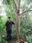 (青山園藝).榔榆.紅雞油.紅櫸木.米俓20~40cm.高度6~13米.樟樹茄苳肖楠油杉桂花光臘紫薇楓樹
