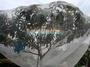 (2.5米~無包繩款)防蟲網罩/果樹防蟲/網室/園藝有機資材/無毒農業/溫室/尼網
