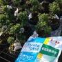 奧綠肥(3包超商取貨免運專區)奧斯魔肥 奧妙肥 花肥 葉肥