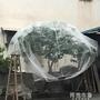 防鳥網 楊梅網罩櫻桃防蟲防風防鳥網水果樹罩多肉蓮霧桃樹羅幔大棚專用罩