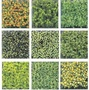 水族箱裝飾水草 水族箱草皮 魚缸草皮魚缸水草 可拼接15*15cm-7901003